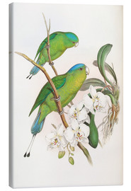 Lienzo  Philippine Racket tailed Parrot - John Gould