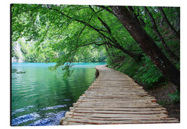 Cuadro de aluminio  Plitvice Lakes National Park Boardwalk - Renate Knapp