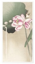 Póster  Lotus Flower and Finch - Ohara Koson