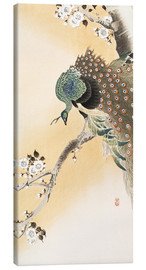 Lienzo  A peacock in a cherry tree crown - Ohara Koson