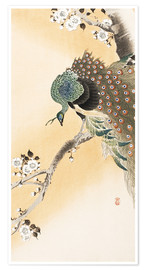 Póster  A peacock in a cherry tree crown - Ohara Koson