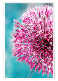 Póster Allium in Pink