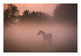 Póster Horse in the mist