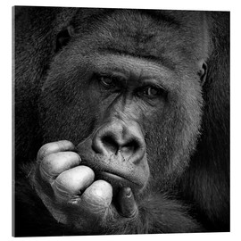 Metacrilato  thoughtful gorilla - Antje Wenner-Braun