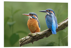 Cuadro de PVC  Kingfisher Germany - WildlifePhotography