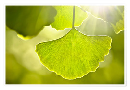 Póster Ginkgo leaves