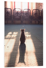 Matteo Colombo - Cat at the window