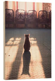 Madera  Cat at the window - Matteo Colombo
