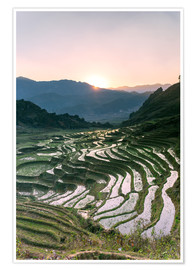 Póster  Landscape: sunrise over rice paddies in Sa Pa, Vietnam - Matteo Colombo