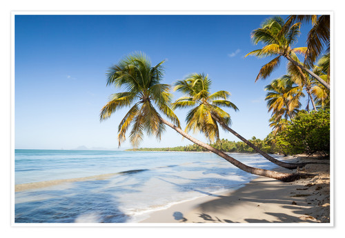 Póster Famous Les Salines tropical beach with palm trees, Martinique, Caribbean
