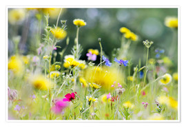 Póster Summer Meadow with blooming wild Flowers