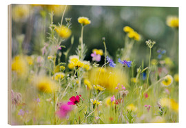Cuadro de madera  Summer Meadow with blooming wild Flowers - Lichtspielart
