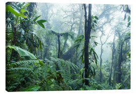 Lienzo  Rainforest in Costa Rica - Matteo Colombo