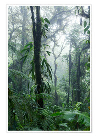 Póster Costa Rica - Rainforest