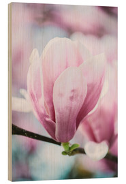 Cuadro de madera  Closeup of blossoming magnolia in spring - Peter Wey