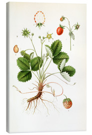 Lienzo  Strawberry - Carl Axel Magnus Lindman