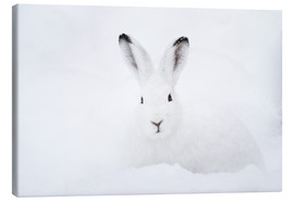 Lienzo  Mountain hare in winter - Peter Wey