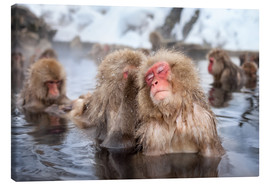 Lienzo  Japanese Snow Monkeys in Nagano - Jan Christopher Becke