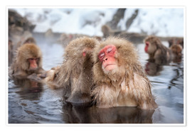 Póster Japanese Snow Monkeys in Nagano