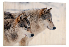 Madera  Two Timber Wolves in the snow - Louise Murray