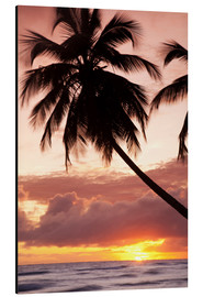 Aluminio-Dibond  Tropical sunset, Bridgetown, Barbados, West Indies, Caribbean, Central America - Angelo Cavalli