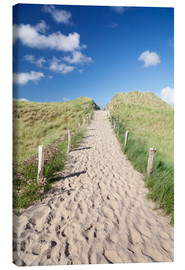 Lienzo  Path through dunes, Sylt, North Frisian Islands,Nordfriesland, Schleswig Holstein, Germany - Markus Lange