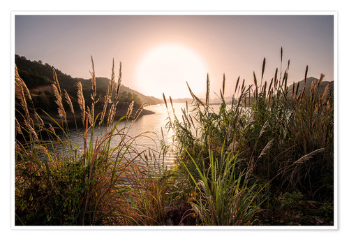 Póster Reeds and setting sun at the shore of Qiandao Lake
