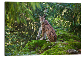 Roberto Moiola - Lynx in the Bavarian National Park