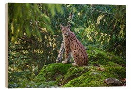Cuadro de madera  Lynx in the Bavarian National Park - Roberto Moiola