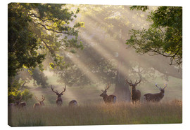 Lienzo  Deer in morning mist - Stuart Black