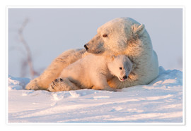Póster  Polar bear (Ursus maritimus) and cub, Wapusk National Park, Churchill, Hudson Bay, Manitoba, Canada, - David Jenkins