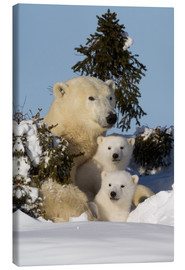 Lienzo  Polar bear (Ursus maritimus) and cubs, Wapusk National Park, Churchill, Hudson Bay, Manitoba, Canada - David Jenkins