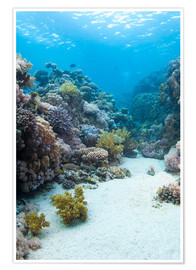 Póster  Coral reef in blue water - Mark Doherty