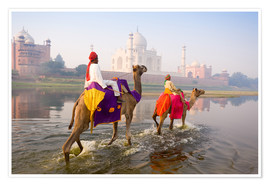 Póster Camel riders at the Taj Mahal