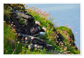Póster Puffins, Orkney Islands