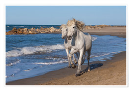 Camargue horses on the beach
