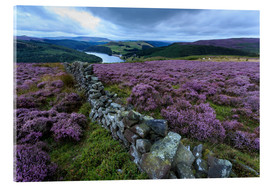 Metacrilato  Heather covered Bamford Moor and dry stone wall - Eleanor Scriven