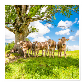 Póster Calves in the Allgäu