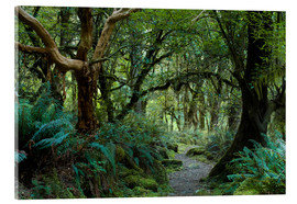 Cuadro de metacrilato  Primeval forest on kepler track, fiordland, new zealand - Peter Wey
