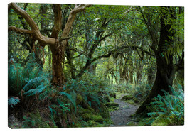 Lienzo  Primeval forest on kepler track, fiordland, new zealand - Peter Wey