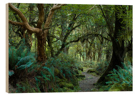 Cuadro de madera  Primeval forest on kepler track, fiordland, new zealand - Peter Wey