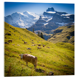 Cuadro de metacrilato  Cow in the Swiss Alps - Jan Schuler