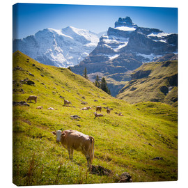 Lienzo  Cow in the Swiss Alps - Jan Schuler