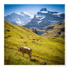 Póster  Cow in the Swiss Alps - Jan Schuler