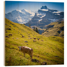 Madera  Cow in the Swiss Alps - Jan Schuler
