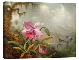 Lienzo  Cattleya Orchid and Three Brazilian Hummingbirds - Martin Johnson Heade