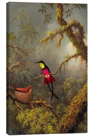 Lienzo  A pair Rotnacken topaz hummingbird - Martin Johnson Heade