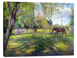 Lienzo  Horse paddock - Timothy Easton