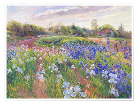 Póster  Field of flowers - Timothy Easton
