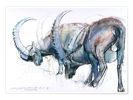 Póster  Ibex searching food - Mark Adlington
